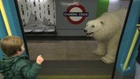 Isbjørn på tur i London