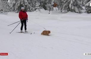 Katten Jesper har blogg, facebookprofil og liker å gå på skitur