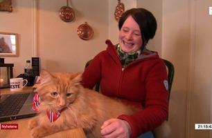Nå er Jesper blant verdens mest kjente katter