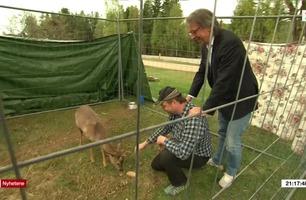 TV 2-reporter måtte søke dekning for kjendis-rådyr