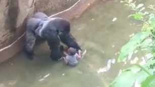 Gutt (4) falt ned til gorilla i dyrepark