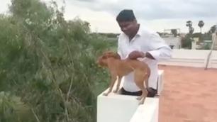 Hundevalp-videoen som ryster hele India
