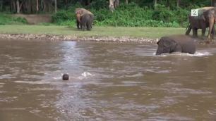 Den lille elefanten reagerer med en gang den ser hva som skjer