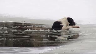 Hunden holder på å drukne – så kommer hjelpen fra uventet hold