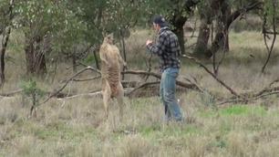 Mann slo til kenguru for å redde hunden sin