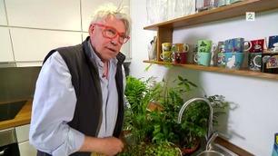 Blomster-Finn: – Slik overlever plantene i ferien