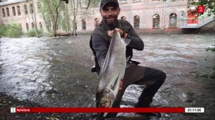 Fisker laks midt i Oslo