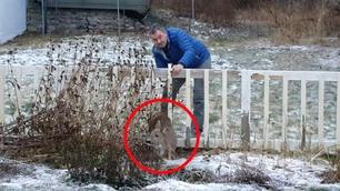 Bambi satt bom fast i Alices gjerde