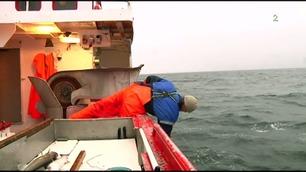 Oppsiktsvekkende fangst ved Jan Mayen