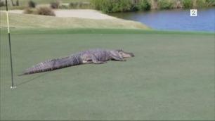 Golfspillere ble utkonkurrert på greenen: – Holy shit!!