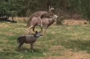 Plutselig får hjorten seg en skikkelig overraskelse