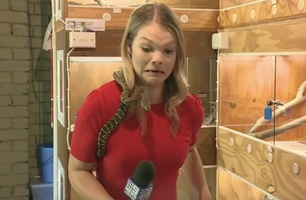 Plutselig hugger slangen til