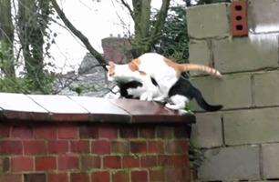 Kattenes ubetalelige reaksjon ble filmet