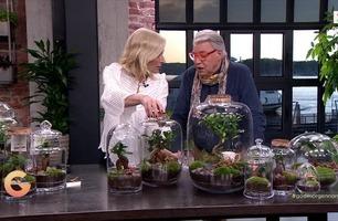 Planter i glassbeholdere