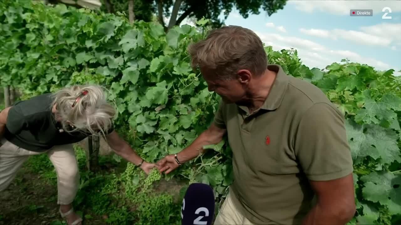 Dag Otto besøker norskdrevet vingård i Frankrike
