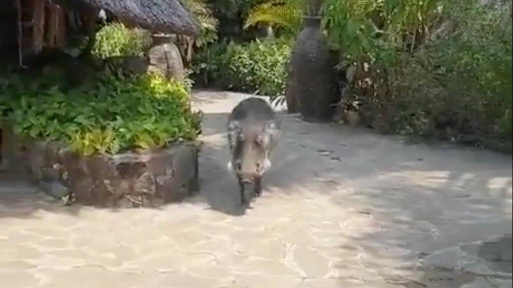 Prøver å klappe dyret – så går det galt