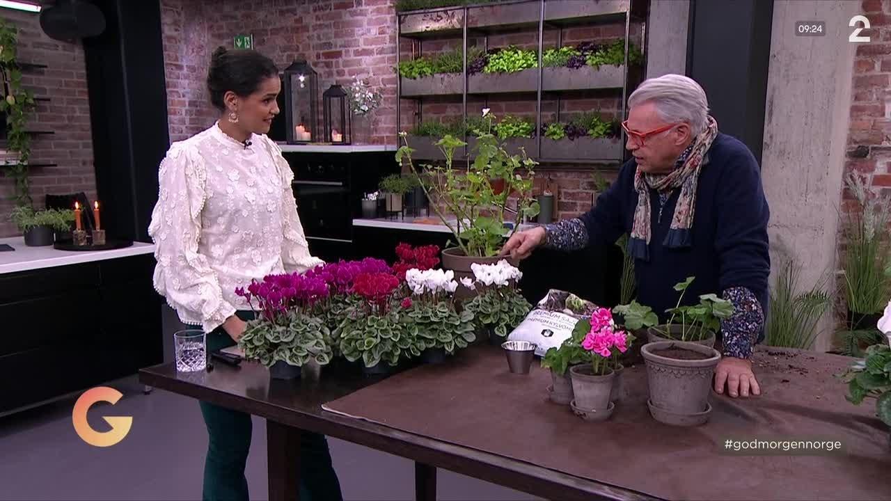 Slik planter du stiklinger